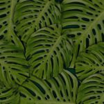 Een palm kamerplant, stoer, elegant en veel groen in huis